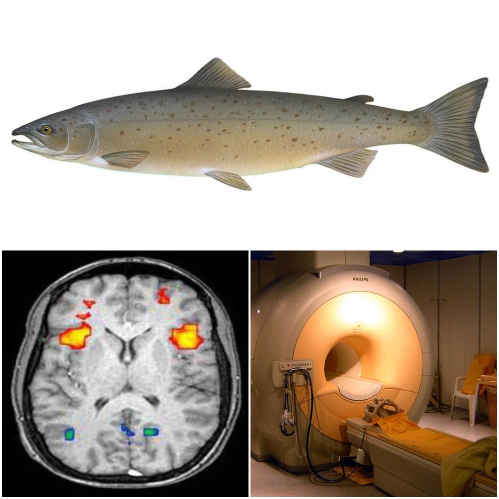 Salmon MRI